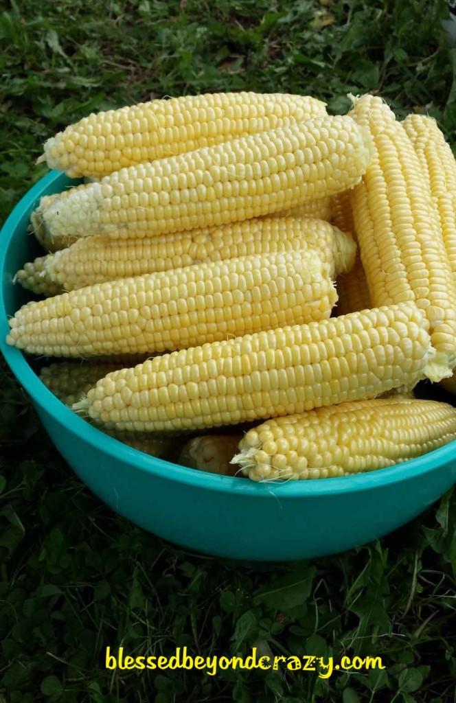 Fresh, juicy, fresh sweet corn in a bowl