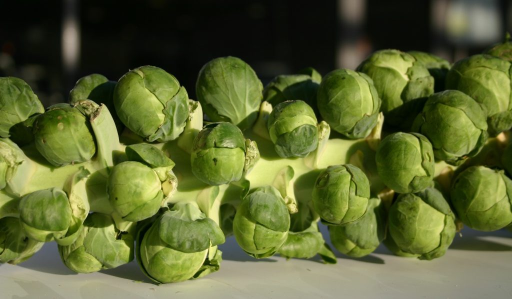 Fresh Brussel sprouts on stem