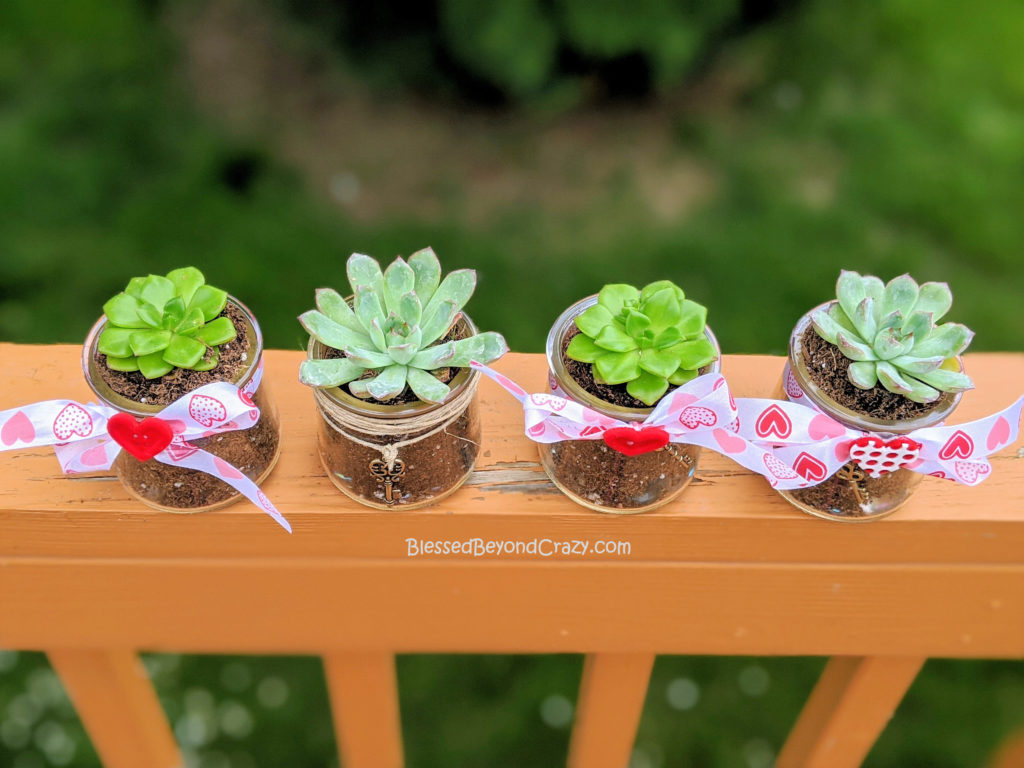 Overhead view of Repurposed Succulent Planters Kids Can Easily Make